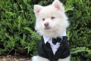 צילומים לחתונה כל הסיבות להצטלם יחד עם הכלב שלכם