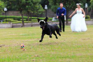 צילומים לחתונה כל הסיבות להצטלם יחד עם הכלב שלכם.